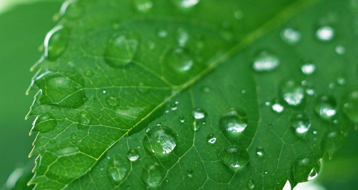 植物提取物潜力