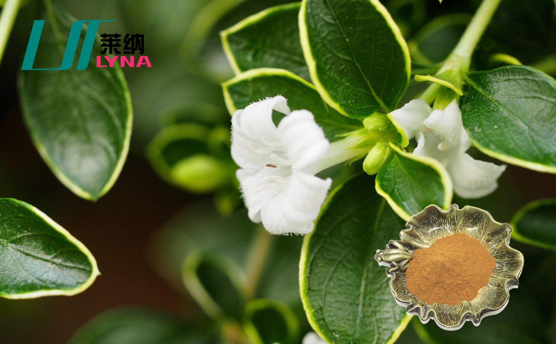 陕西植物提取物