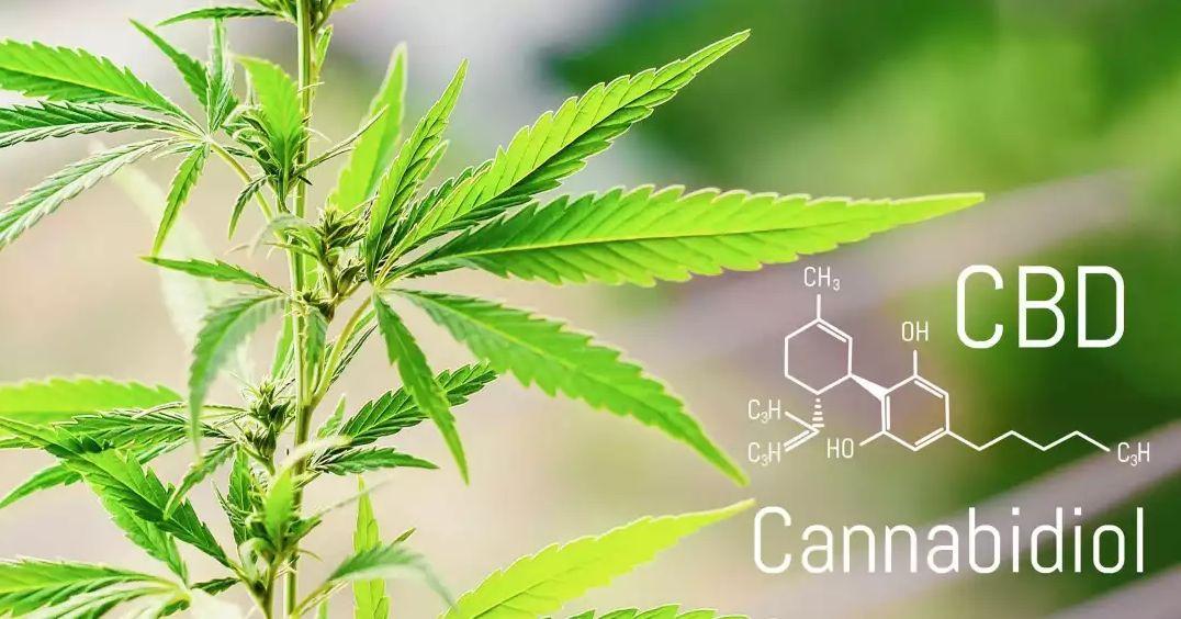 工业大麻提取物大麻二酚CBD生产制备工艺
