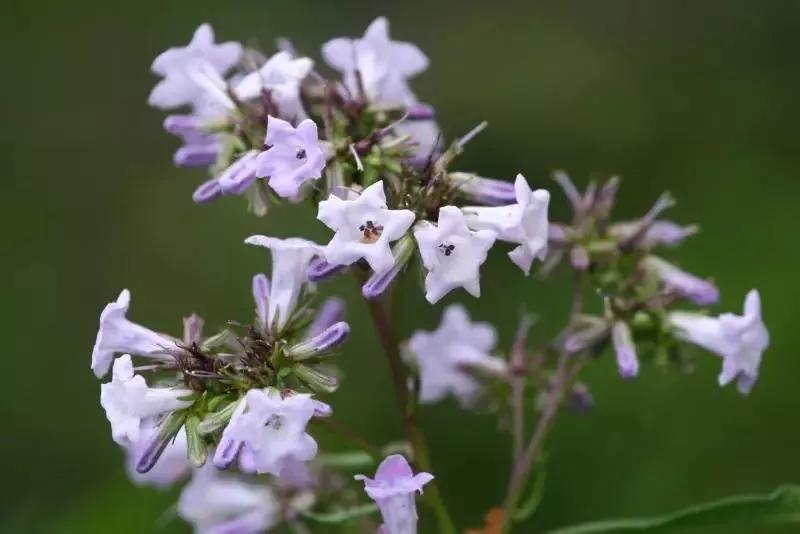 新兴流行的草本植物提取物推荐