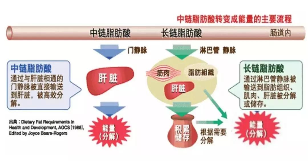 MCT粉中链甘油三酯的特性及应用
