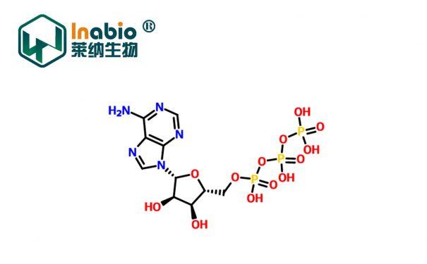 三磷酸腺苷