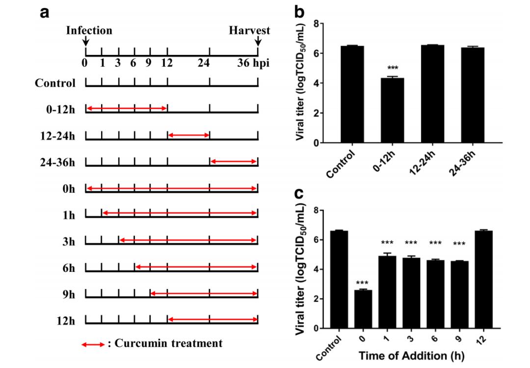 姜黄等中药提取物有效成分或可帮助消灭新冠病毒